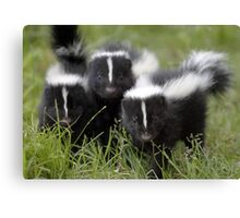 Oh Cool...Baby Black And White Foxes :-)  Canvas Print