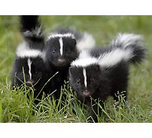 Oh Cool...Baby Black And White Foxes :-)  Photographic Print