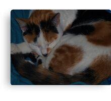 sleeping again Canvas Print