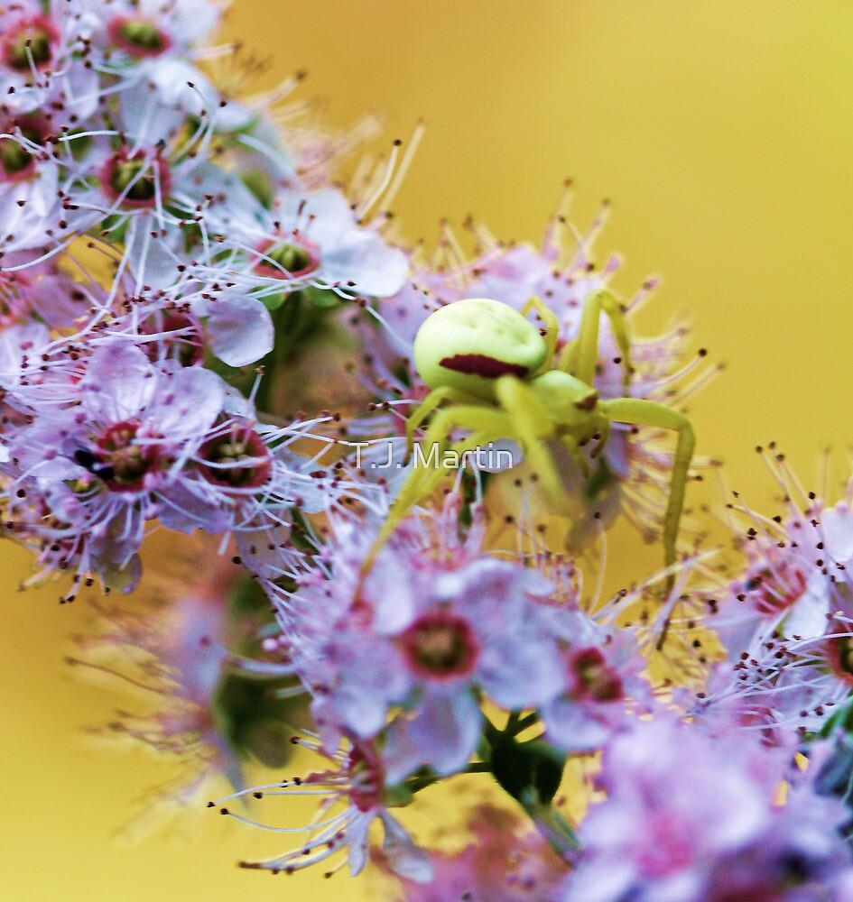 Pink Wildflower - Yellow Spider by T.J. Martin