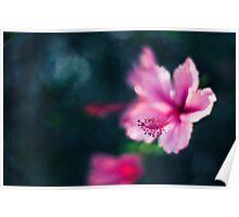 Pink Hibiscus Bokeh Poster