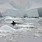 Minke Whale by Lisa Davidson