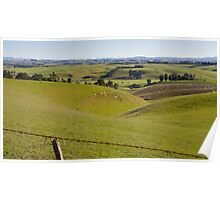 Rolling Countryside in Southland Poster