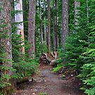 Into the Forest by Bob Hortman