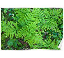 Cascade Ferns Poster