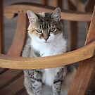 Adorable Tabby Cat by Cynthia48