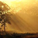 The Dawning Day by Jemma Ryan