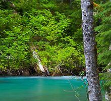 Ohanapecosh River by RavenFalls