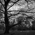 Botanical Gardens Big Tree - Castlemaine by Sherene Clow