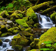 Forest Stream by RavenFalls