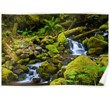 Forest Stream Poster