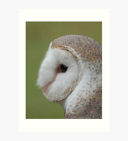 Fluffy face - barn owl profile Art Print