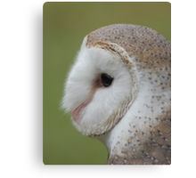 Fluffy face - barn owl profile Canvas Print