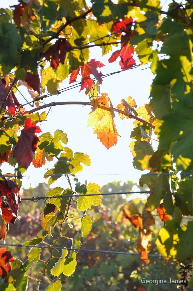 Autumn Bower, Rutherglen by Georgina James