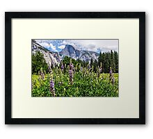 Wildflowers in Cook's Meadow, Yosemite Valley, California, USA Framed Print