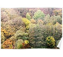 Autumnal coloured woods Poster