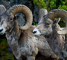 Big Horn Rams    #5827 by JL Woody Wooden
