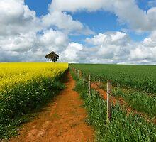 Thriving crops...Dookie. by mitpjenkeating