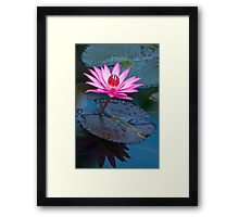 Reflections - pink waterlilly  Framed Print