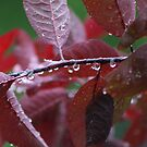 droplets by ChereeCheree