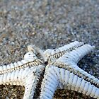 Broken Starfish  by emele