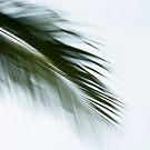 Flight of the palms #04 by LouD