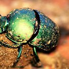 THE GREEN DUNG BEATLE AT WORK by Magaret Meintjes