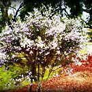 Small pretty flowering Tree by EdsMum