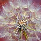 '' Dandelion '' by helmutk