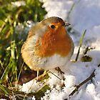 Christmas Robin by Gareth Jones