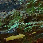 Colourful Lichen on a Fallen Log by myraj