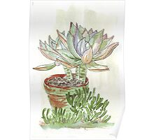 """Graptoveria """"Fred Ives"""" Poster"""