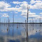 Manasquan Reservoir by Kelly Chiara