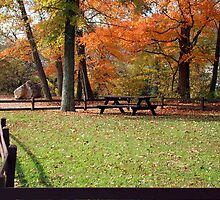 Park Peace by naturevine