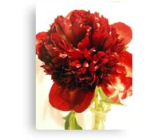 Deep Red Peony flower Canvas Print