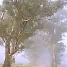 Country lane in fog by julie anne  grattan