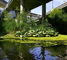 The water garden under the bridge by Mike Cressy