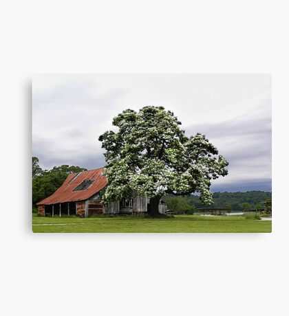 Magestic Tree, and Childhood Memories   Canvas Print