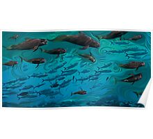 Pilot whale with fish Poster