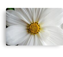 Flora macro Canvas Print