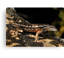 Texas Spiney Lizard 4 Canvas Print