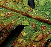 Leaf Drops by bicyclegirl