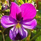 Pretty Dog Violet by sarnia2