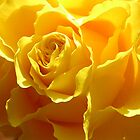 'Sunshine in a vase' by Rachel Kendall