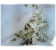 Silver Dust Snow Poster