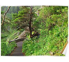 Cape Perpetua Path.....Tree Seat Poster