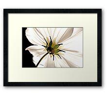 Floral Lamp Framed Print