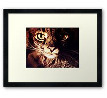 Silly Whiskers Framed Print