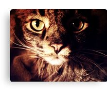 Silly Whiskers Canvas Print