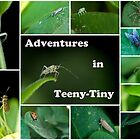 Adventures In Teeny-Tiny by Angela Pritchard